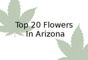 Marijuana Phoenix | Top 20 Marijuana from Marijuana Dispensaries and Caregivers
