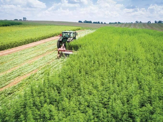 cbd hemp farming